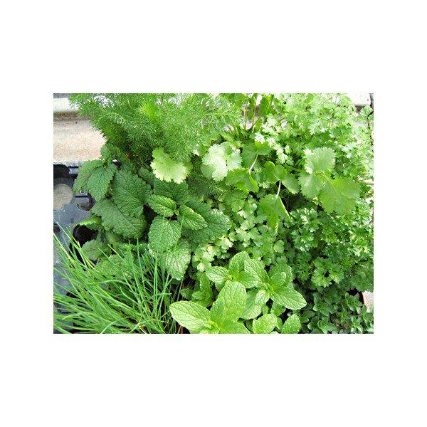 Lot de plantes aromatiques et condimentaires bio - 1 u ...